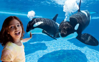 Thumbnail for SeaWorld Orlando