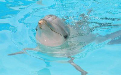 Thumbnail for Delphinus Puerto Morelos