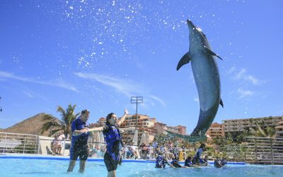 Thumbnail for Cabo Dolphins