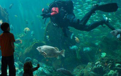 Thumbnail for Vancouver Aquarium