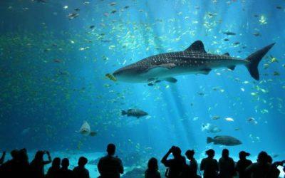 Thumbnail for Georgia Aquarium
