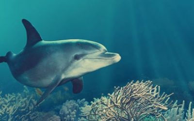 Thumbnail for Delphinus Acuario Interactivo Cancún