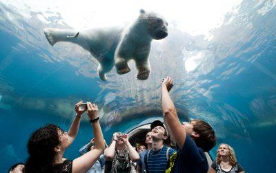 Thumbnail for Pittsburgh Zoo & PPG Aquarium