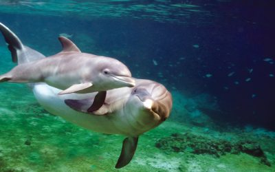 Thumbnail for Dolphin Quest Bermuda