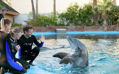 Thumbnail for Siegfried & Roy's Secret Garden and Dolphin Habitat at The Mirage