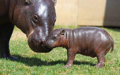 Thumbnail for Tanganyika Wildlife Park