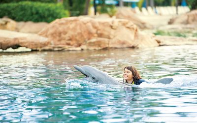 Thumbnail for Discovery Cove