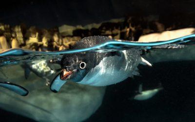 Thumbnail for SeaWorld San Diego