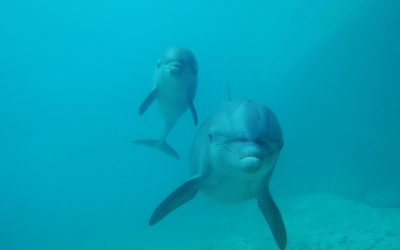 Thumbnail for Dolphinaris Cancun