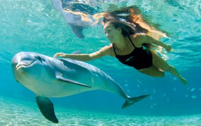 Thumbnail for Dolphin Quest Oahu