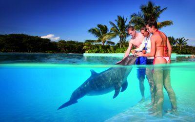 Thumbnail for Dolphinaris Tulum