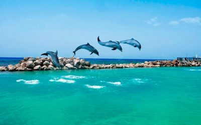 Thumbnail for Dolphin Discovery Cancun – Isla Mujeres