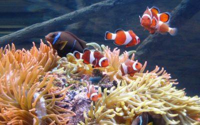 Thumbnail for Landry's Kemah Aquarium