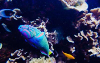 Thumbnail for Landry's Nashville Aquarium