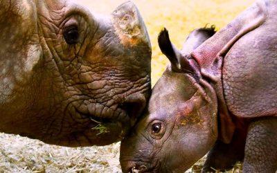 Thumbnail for Denver Zoo